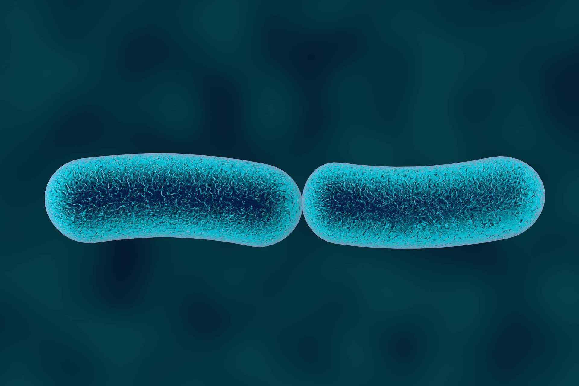 écosystème intestinal