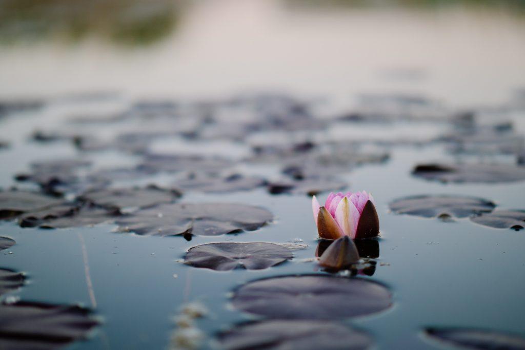 bysohealthy naturopathie lotus